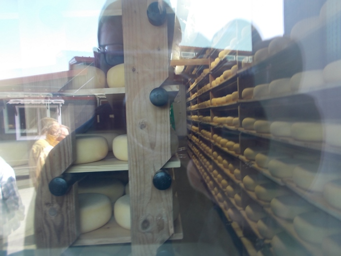 Photo of cheese aging room at Point Reyes Farmstead